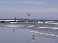 Atlantic city's beach