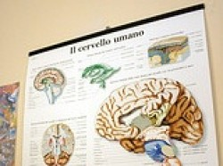 """""""Un cervello di ferro"""""""
