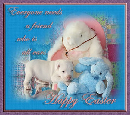 Il coniglietto di Pasqua