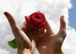 Rosa tra le mani