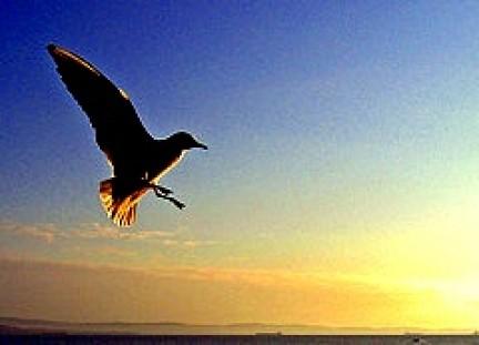 Uccellino in volo