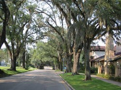 """Una strada alberata di Tallahassee"""