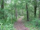 Interno Pine Bush