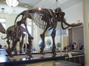 Mammoth Fossil