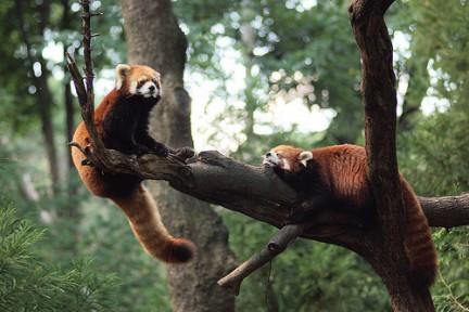 Divertirsi tra i rami al Prospect Park Zoo