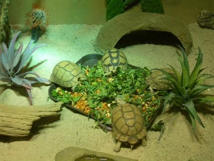 Tartarughe al Prospect Park Zoo