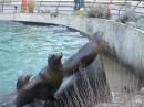 Booklyn Prospect Park Zoo