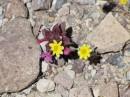 La Valle della Morte, parco nazionale USA dal nome tragico ma caratteristico e sicuramente bello da visitare