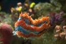Un acquario con innumerevoli pesci anche tropicali