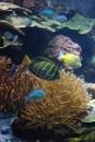 Colori della vita del mare