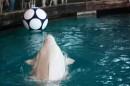 Gioco di delfini