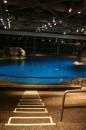 Interno Shedd Aquarium
