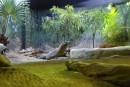 Mammiferi dell'acquario