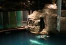 Particolare Shedd Aquarium Chicago