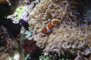 Piccoli pesci Shedd Aquarium Chicago