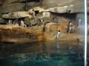 Shedd Aquarium - Pinguini
