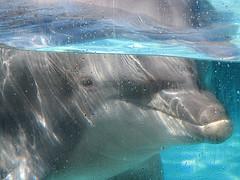 Nuotare con i delfini