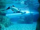 Aquatica: il nuovo Parco Acquatico in Orlando