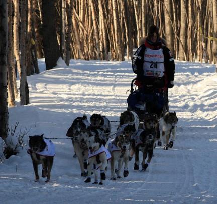 8 Marzo 2009 partenza Iditarod sled dog