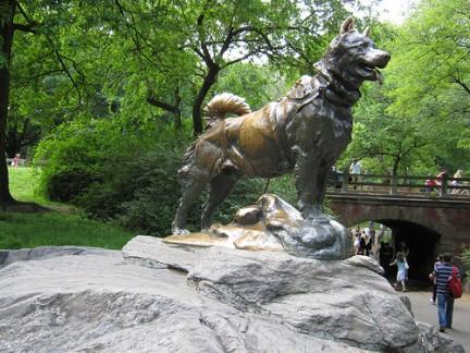 Central Park monumento all'eroico cane che nel 1925 raggiunse Nome in Alaska con i medicinali per una grave epidemia