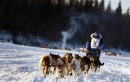 Una slitta in gara nella Iditarod Trail Sled Dog Race