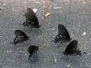 Farfalle nel parco