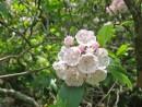 Fiori nel Parco