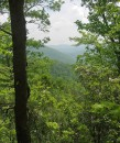 Foresta nel Great Smoky Mountains