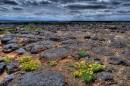 Petroglyph National Monument - Panorama