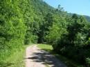Una strada nel verde West Virginia