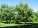 Augusta - Pine Tree State Arboretum