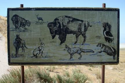Animali di Antelope Island