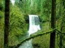Una piccola cascata immersa nel verde dell'Oregon
