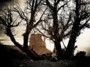 Monument Valley vista tra gli alberi