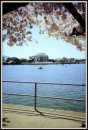 Visuale del Jefferson Memorial