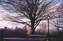 Autunno a Central Park e gli alberi si spogliano