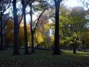 Autunno a New York I prati di Central Park iniziano a coprirsi di foglie cadute