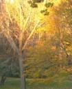 Il tramonto d'autunno veste di colori ambrati il Central Park di New York
