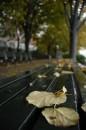 Le strade a New York si vestono di foglie autunnali