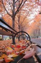 New York cadono foglie d'autunno sulle panchine solitarie