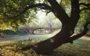 Gothic Bridge - Central Park, New York gli alberi cedono foglie all'autunno
