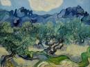 Vincent van Gogh - Alberi di Ulivo