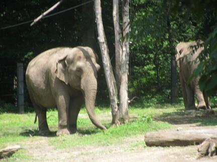 Bronx Zoo Elefanti