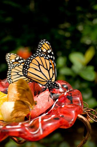 Farfalle nel Bronx Zoo