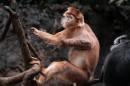 Bronx Zoo Saltando di albero in albero