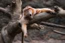 Bronx Zoo Sono stanco e vorrei riposare