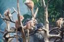 Scimmiette al Bronx Zoo
