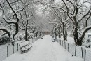 Central Park avvolto nella neve