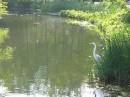 Turtle Pond Egret l'alba di un nuovo giorno