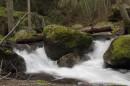Il Parco dove i sentieri si immergono tra maestose sequoie giganti